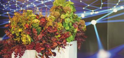 roślinne aranżacje scenografii targowej
