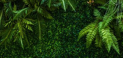 zielona ściana z kwiatów sztucznych