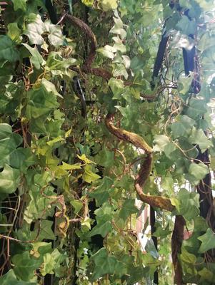 podwieszany sufit ze sztucznych roślin