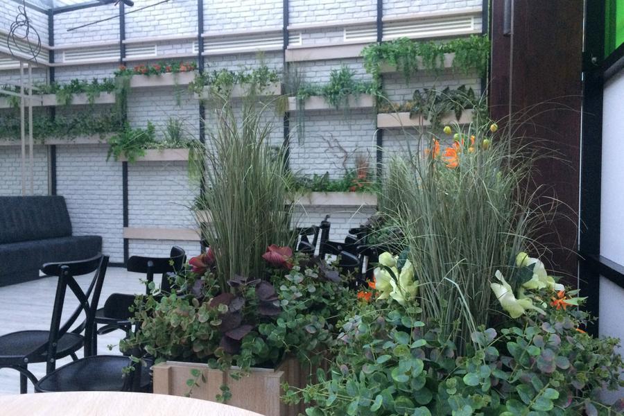 Roślinna aranżacja BOMM w nowej warszawskiej restauracji