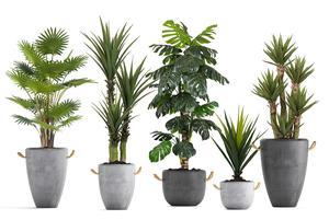 Zobacz więcej o: Tropikalne nowości w ofercie Bomm - sztuczne drzewka
