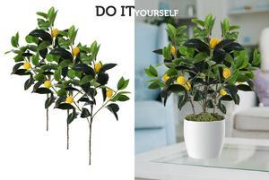 Zobacz więcej o: Rośliny doniczkowe - zrób je sam