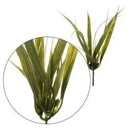 Dracena – pik zielony 30 cm (L023)