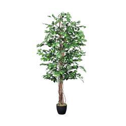 Fikus - drzewko (T963)