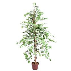 Fikus - drzewko (T889)