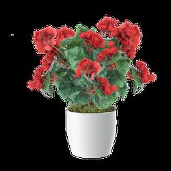 Begonia - bukiet 35 cm (B271)