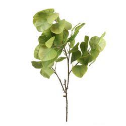 Eukaliptus - gałązka satyna gumowana (R058)
