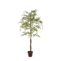 Wisteria - drzewko (T134)