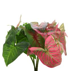 Begonia - gałązka liściasta (L320)