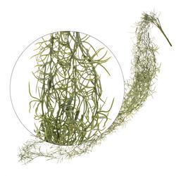 Asparagus - zwis 1,1 m (L016)
