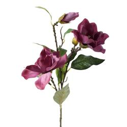 Magnolia - gałązka (K087)