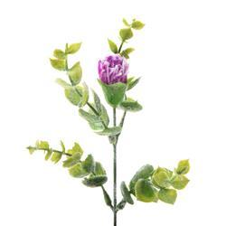 Gałązka omszała kwitnąca (L269)