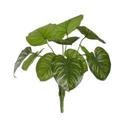 Peacock roślina zielona (R274)