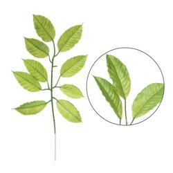 Gardenia - gałązka liściasta (L398)