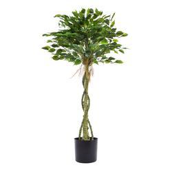 Fikus - drzewko w doniczce (T012)