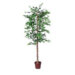 Fikus - drzewko (T875)