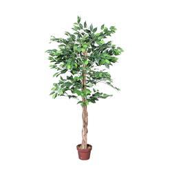 Fikus - drzewko (T900)