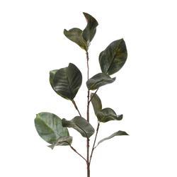 Magnolia - gałązka liściasta (R126)