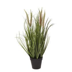 Kwitnąca trawa w doniczce 60 cm (TR003)