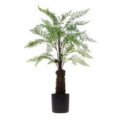 Paproć - drzewko w donicy 60 cm (T003)