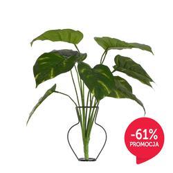 Pothos roślina zielona (R273)