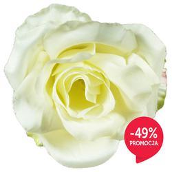 Róża - główka (W076N)