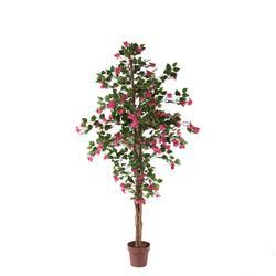Bugenvilla - drzewko (T137)