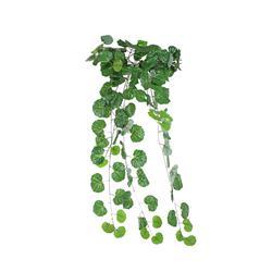 Begonia x 133 liście bluszcz (B126)
