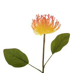 Protea - gałązka dekoracyjna 55 cm (L329)