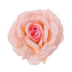 Róża - główka rozwinięta (W703)