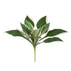 Hosta - bukiet liści (D050)