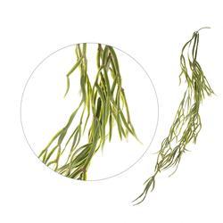 Storczyk - zwis korzeni (L017)
