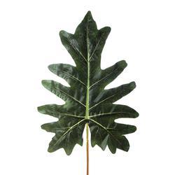 Philodendron - liść 77 cm (L926)