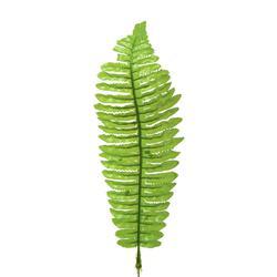 Paproć liść (L918)