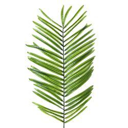 Palma - gałązka (R413)