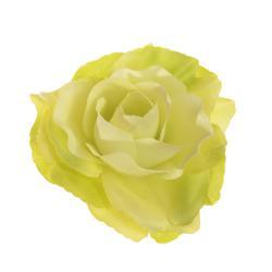 Róża Sonia - główka (W694)