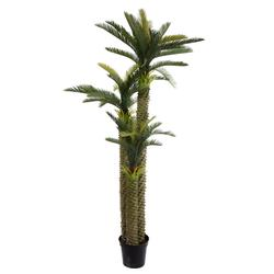 Sagowiec - palma w donicy 240 cm (T022)