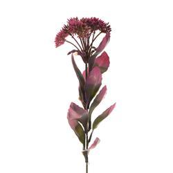 Rozchodnik - gałązka dekoracyjna z różowym kwiatostanem (L467)