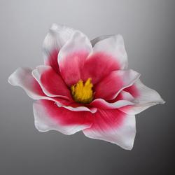 Magnolia - główka (W180)