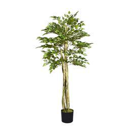 Brzoza 165cm drzewko w doniczce (T211)