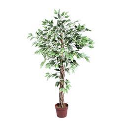 Fikus - drzewko (T973)