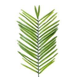 Liść palmy (R400)