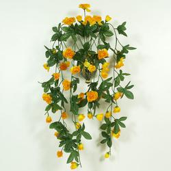 Róża - pnącze (B668)