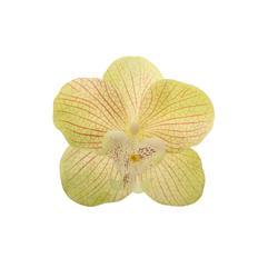 Orchidea - główka satynowa (W022)