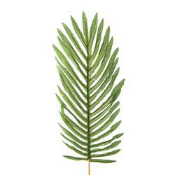 Palma - liść (L561)
