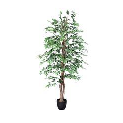 Fikus - drzewko (T964)