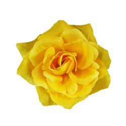 Róża rozwinięta - główka (W690)