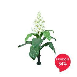 Gloksynia - roślina kwitnąca (D043)