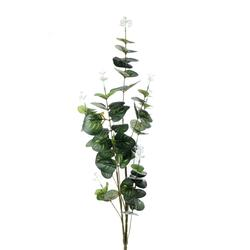 Eukaliptus - gałązka (L358)