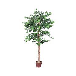 Fikus - drzewko (T972)